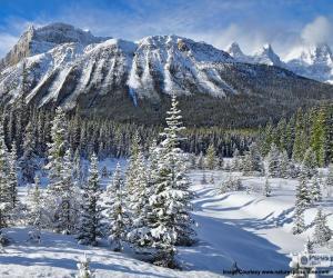 Puzzle de Crowfoot Mountain, Canadá