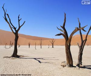 Puzzle de Deadvlei, Namibia