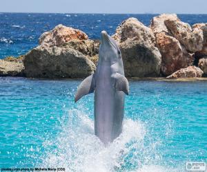 Puzzle de Delfín haciendo un truco