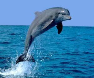 Puzzle de Delfín