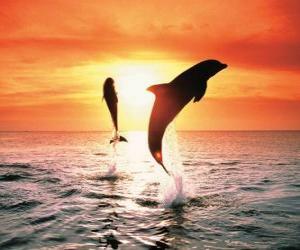 Puzzle de Delfines al atardecer