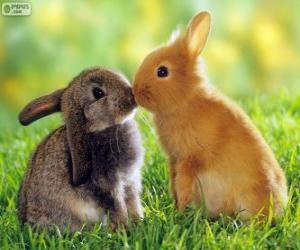 Puzzle de Dos bonitos conejos frente a frente