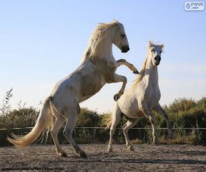 Puzzle de Dos caballos blancos