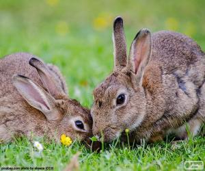 Puzzle de Dos conejos comiendo