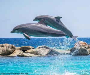 Puzzle de Dos delfines saltando