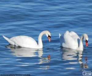 Puzzle de Dos elegantes cisnes
