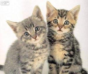 Puzzle de Dos gatitos