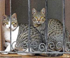 Puzzle de Dos gatos en una ventana