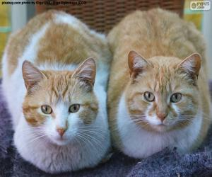 Puzzle de Dos gatos