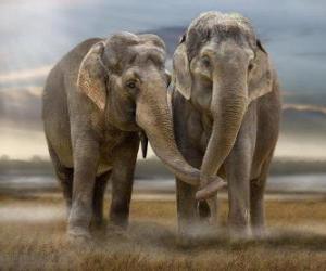 Puzzle de Dos grandes elefantes con las trompas entrelazadas