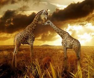 Puzzle de Dos jirafas al atardecer