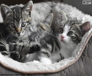 Puzzle de Dos lindos gatitos