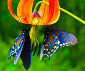 Puzzle de Dos mariposas en una flor