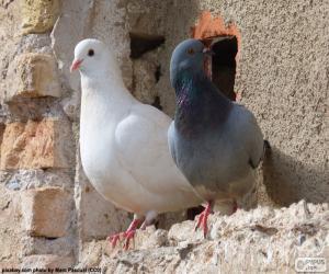Puzzle de Dos palomas