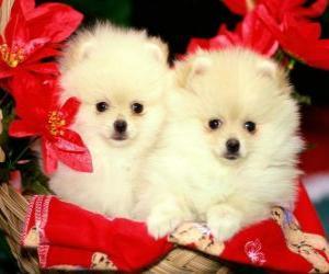 Puzzle de dos perritos junto a unas plantas de navidad