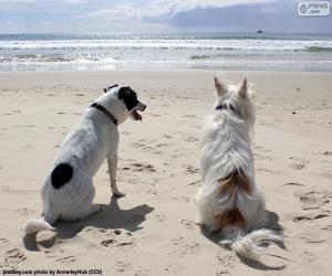 Puzzle de Dos perros en la playa