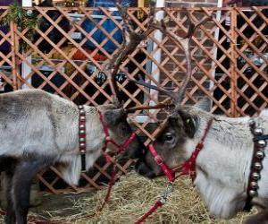 Puzzle de Dos renos navideños