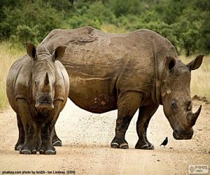 Puzzle de Dos rinocerontes