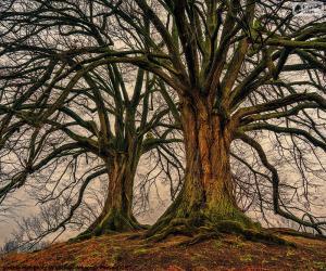 Puzzle de Dos viejos árboles