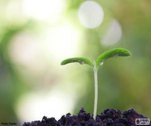 Puzzle de El nacimiento de una planta