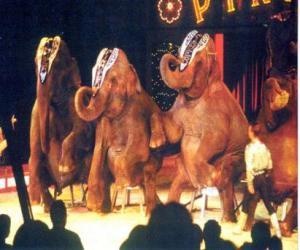 Puzzle de Elefantes adiestrados