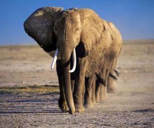 Puzzle de Elefantes caminando en fila