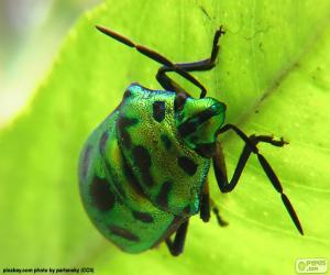 Puzzle de Escarabajo verde