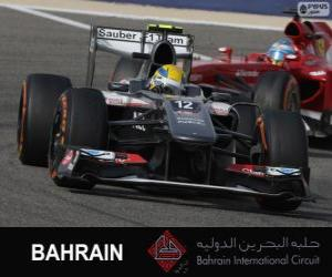 Puzzle de Esteban Gutierrez - Sauber - Circuito Internacional de Bahrain 2013
