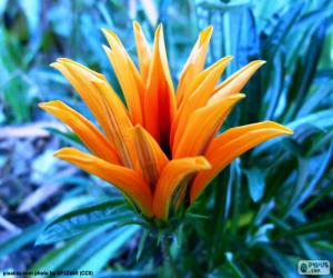 Puzzle de Exótica flor naranja