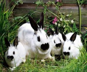 Puzzle de Familia de conejos