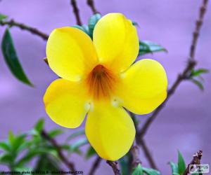 Puzzle de Flor amarilla cinco pétalos