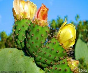 Puzzle de Flores de cactus amarillas