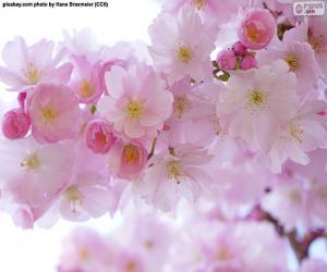 Puzzle de Flores de cerezo