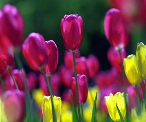 Puzzle de Flores primaverales