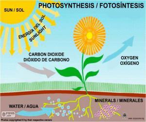 Puzzle de Fotosíntesis