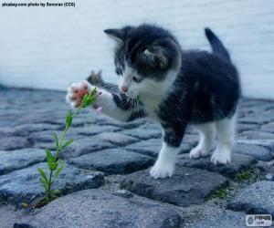 Puzzle de Gatito y planta