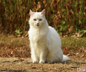 Puzzle de Gato blanco sentado