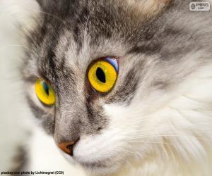 Puzzle de Gato de ojos amarillos