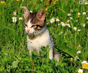 Puzzle de Gato en el campo