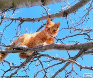 Puzzle de Gato en una rama