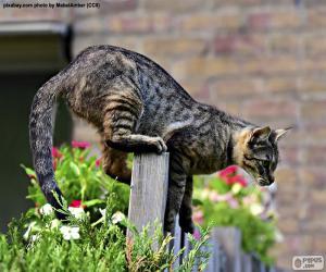 Puzzle de Gato en una valla