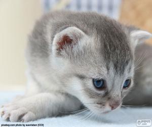 Puzzle de Gato gris de ojos azules