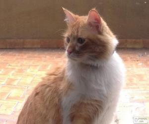 Puzzle de Gato marrón claro y blanco