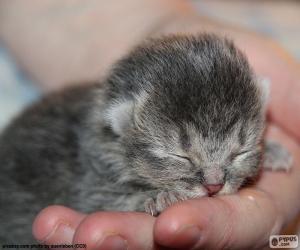 Puzzle de Gato recién nacido