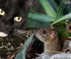 Puzzle de Gato y ratón