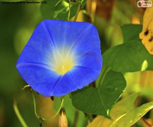 Puzzle de Gloria de la mañana azul