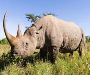 Puzzle de Gran rinoceronte