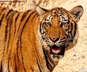 Puzzle de Gran tigre