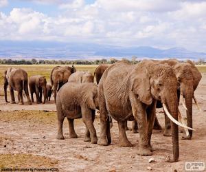 Puzzle de Grupo de elefantes