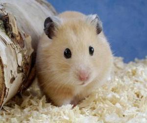 Puzzle de Hámster, roedores utilizados como mascotas o animales de laboratorio